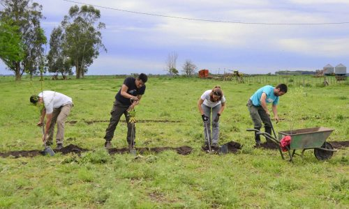 4a. Plantando Agrofloresta Don Pedro, Ayacucho